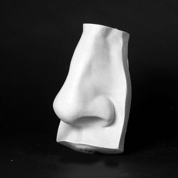 Drawing Plaster Cast Nose