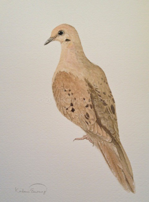 Kateri Ewing. Morning Dove. 8x10. Watercolour on paper, 2014 (Rublev Watercolors: Cypress Raw Umber Dark, Pink Pipestone, Gold Ocher, Venetian Red.)