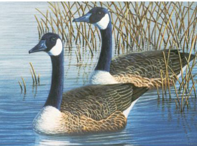 Royal & Langnickel Painting by Numbers Adult Sets: Geese