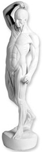 Sculpture House Plaster Cast Anatomical Figure