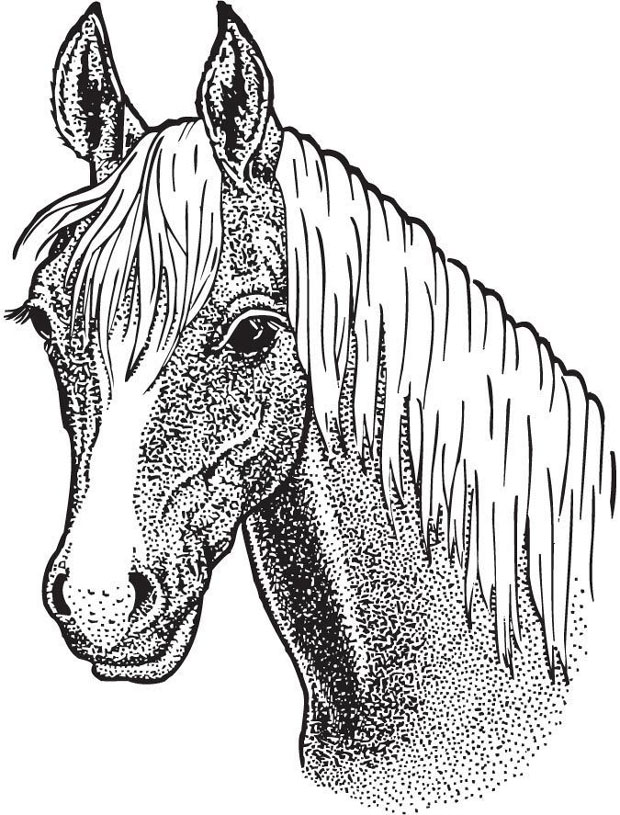 Sarasota Stamps Mounted Rubber Stamp: Horse Head Large