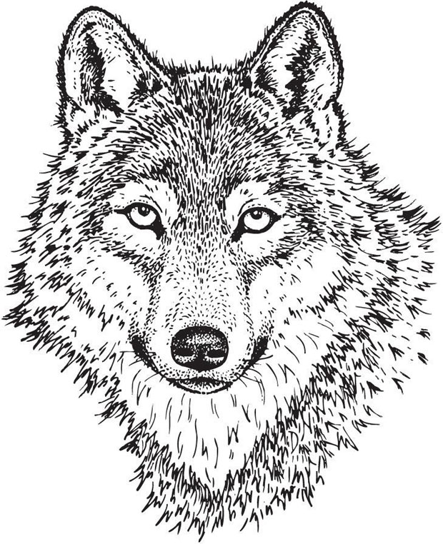 Sarasota Stamps Mounted Rubber Stamp: Wolf Face Large