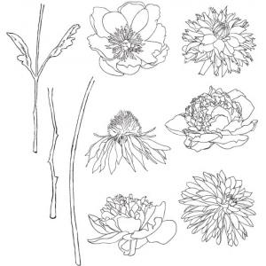 Stampers Anonymous - Tim Holtz - Flower Garden Stamp Set