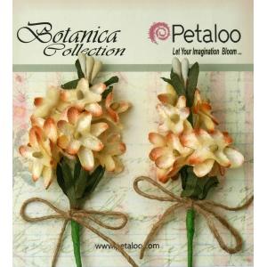 Petaloo - Velvet Lilacs x 2 - Cream/Amber