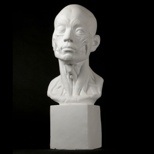 Natural Pigments Drawing Plaster Cast Head (Anatomical)