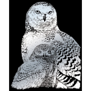 "Royal & Langnickel® Engraving Art Engraving Art Set Silver Foil Snowy Owls: 8"" x 10"", Metallic, (model SILF43), price per set"