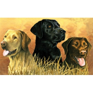 "Reeves™ Large Painting By Numbers Labs in Marsh: 12"" x 16"", (model PBNACL2), price per each"