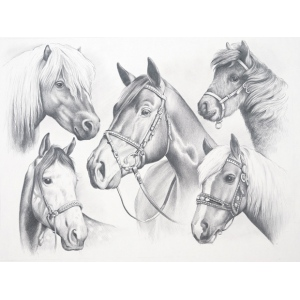 "Reeves™ Large Sketching By Numbers Horse Montage: Multi, 12"" x 15"", (model PPSK2), price per each"