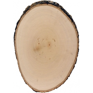 "Walnut Hollow® Basswood Cross-Cut Panel Medium; Format: Panel; Material: Basswood; Size: 7"" - 9""; (model WH27670), price per each"