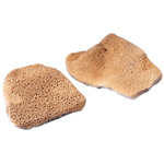 "Hydra Sponge Elephant Ear Sponge: 3 1/2"" to 4"" Diameter"