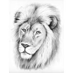 "Reeves Sketching by Numbers Advanced Range: Medium Board, Lion, 9 1/16"" x 11 7/8"""