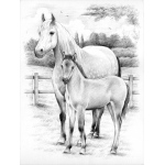 Reeves™ Medium Sketching by Numbers Horse & Foal: Multi, Drawing, (model PPSKM3), price per each