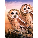 "Royal & Langnickel® Painting by Numbers™ 8 3/4 x 11 3/8 Junior Small Set Tawny Owls; Board Size: 8 3/4"" x 11 3/8""; (model PJS87), price per set"