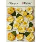 Petaloo - Velvet Pansies x 15 - Amber