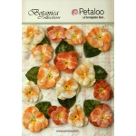 Petaloo - Velvet Pansies x 15 - Apricot