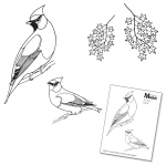 Claritystamps - Finches and Sycamore Stamps and Mask Set