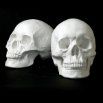 Natural Pigments Drawing Plaster Cast Skull Set (Male/Female)