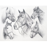 "Reeves™ Large Sketching By Numbers Horse Montage; Color: Multi; Size: 12"" x 15""; (model PPSK2), price per each"