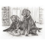 "Reeves™ Large Sketching By Numbers Black Labradors; Color: Multi; Size: 12"" x 15""; (model PPSK4), price per each"