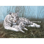"Royal & Langnickel® Painting by Numbers™ 11 1/4 x 15 3/8 Junior Large Set White Tigers: 11 1/4"" x 15 3/8"", (model PJL22), price per set"