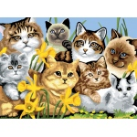 """Royal & Langnickel® Painting by Numbers™ 11 1/4 x 15 3/8 Junior Large Set Cats Montage: 11 1/4"""" x 15 3/8"""", (model PJL6), price per set"""